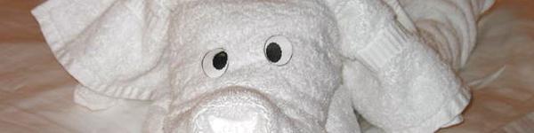 towel-folding-dog-doblar-toallas-animales.jpg